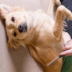 Best Dog Dematting Tool