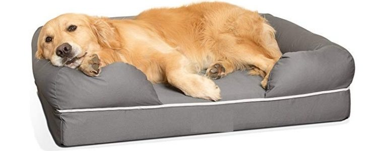 Best Dog Beds For Arthritic Dogs 2019 Updated Mzuri Dogs
